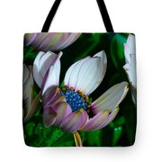 Lavender Frost African Daisy Tote Bag