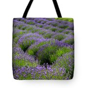 Lavender Rows Tote Bag