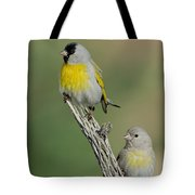 Lawrences Goldfinch Pair On Perch Tote Bag