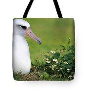 Laysan Albatross Nesting Hawaii Tote Bag