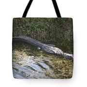 Lazy Alligator Tote Bag