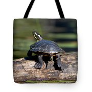 Lazy Day On A Log 6241 Tote Bag