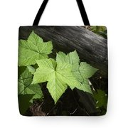 Leaf And Log Tote Bag