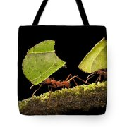 Leafcutter Ants Carrying Leaves Costa Tote Bag