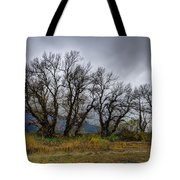 Leafless Trees Tote Bag