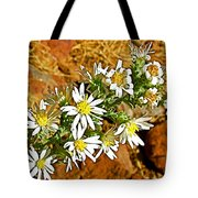 Leafy-bract Asters In Wildcat Canyon Trail Along Kolob Terrace Road In Zion National Park-utah Tote Bag