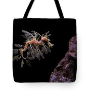 Leafy Sea Dragon Tote Bag by Jonathan Sabin