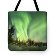 Leaning Spruce  Tote Bag