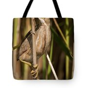 Least Bittern Pictures 14 Tote Bag