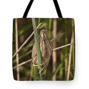 Least Bittern Pictures 22 Tote Bag