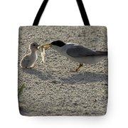 Least Tern Feeding It's Young Tote Bag