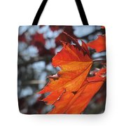 Leaves Backlit 3 Tote Bag