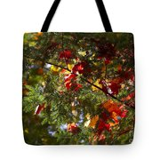 Leaves On Evergreen Tote Bag