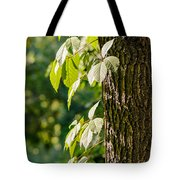 Leaves Under The Sun Tote Bag