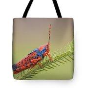 Leichhardts Grasshopper On Pityrodia Tote Bag