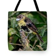 Lemon-rumped Tanager Molting Tote Bag