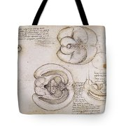 Leonardo: Ventricles, C1508 Tote Bag