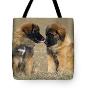 Leonberger Puppies Tote Bag