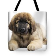 Leonberger Puppy Tote Bag