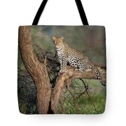 Leopard Panthera Pardus Sitting Tote Bag