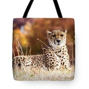 Leopard Watching Tote Bag