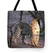 Leopard With African Wild Cat Kill Tote Bag