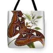Lepidoptera Tote Bag by Edward Donovan