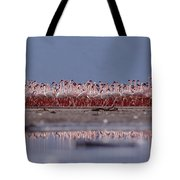 Lesser Flamingos In Mass Courtship Lake Tote Bag