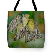 Lesser Goldfinch Females Fighting Tote Bag