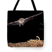 Lesser Long-nosed Bat Approaching Tote Bag