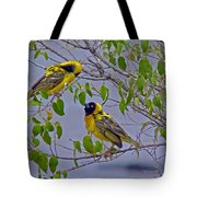 Lesser Masked Weaver Tote Bag