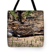 Lesser Nighthawk Chordeiles Acutipennis Tote Bag