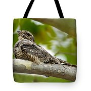 Lesser Nighthawk On Branch Tote Bag