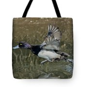Lesser Scaup Drake Tote Bag