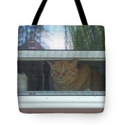 Let Me Out Cat Picture Tote Bag