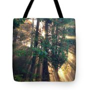 Let Your Light Shine Through Tote Bag