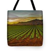 Lettuce Sunrise Tote Bag