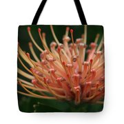 Leucospermum  Pincushion Protea Tropical Sunburst Protea Flower  Tote Bag