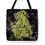 Lichen And Rock Tote Bag