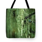 Lichen Hangs From A Tree  Corvallis Tote Bag