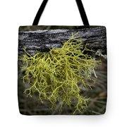 Lichen On Limb Tote Bag