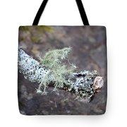 Lichens 2013 Tote Bag