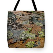 Lichens Along Trail To Plain Of Six Glaciers In Banff National Park-alberta-canada Tote Bag