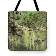 Lichens On Tree Branches In The Scottish Highlands Tote Bag