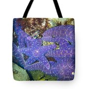 Life Among The Stars Tote Bag