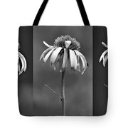 Light Of Day In Black And White Tote Bag