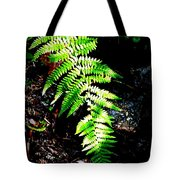 Light Play On Fern Tote Bag