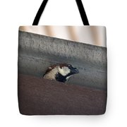 Lil Morning Peeper Tote Bag