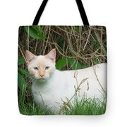 Lilac Point Siamese Cat Tote Bag