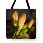 Lily Blossoms At Sunset Tote Bag